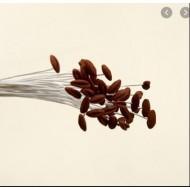 Тычинки лилии L, цвет - коричневый, 12 шт в пучке