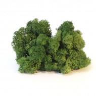 Мох ягель стабилизированный, цвет 54 Moss green, вес 5 гр