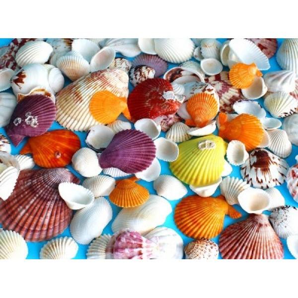 Ракушки морские - набор 200 гр арт.1